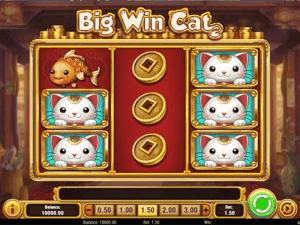 big win cat slot game